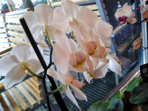 Orquídeas de Samādhi