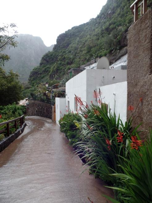 Barranco de Guayadeque, entre plantas y brumas